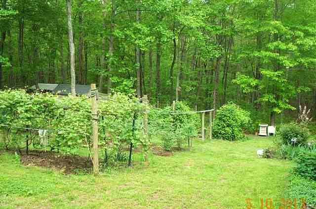 The grapes are in the first bed, blueberries in the middle bed and raspberries at the foot of the hill.
