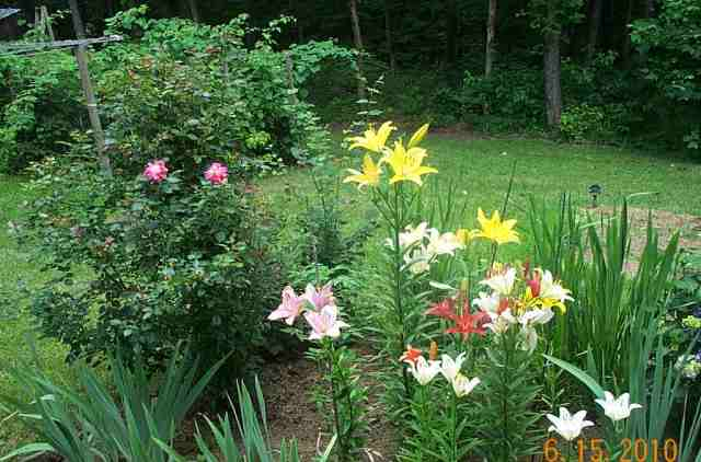 At the end of the hosta bed are the lilies with a rose bush and a lilac bush at the end. This bed goes the full length of the lower deck.