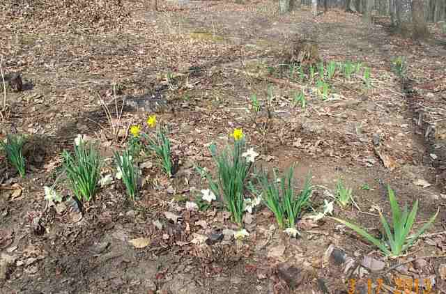 One of the woodland gardens in the spring.
