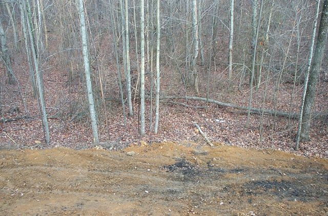 Edge of the cleared lot going into the woods.