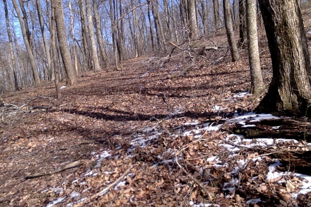woodland path 1