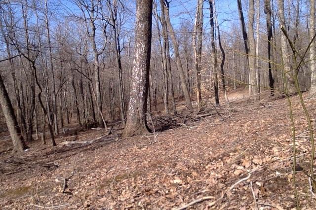 woodland path 4