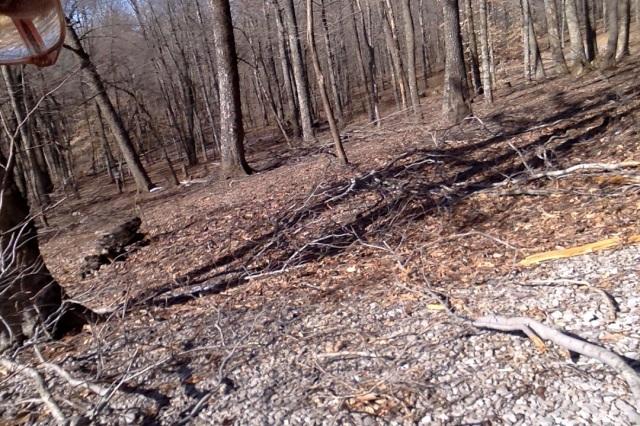 woodland path 5