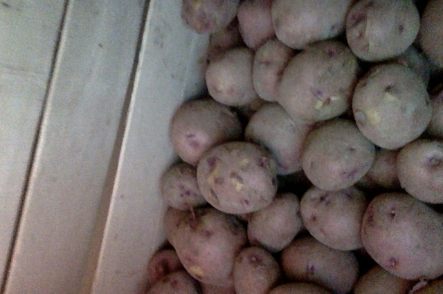 Yesterday's good potatoes