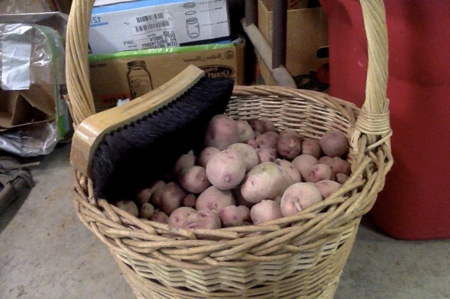 yesterday's small potatoes