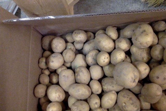 Yukon gold potatoes for storage